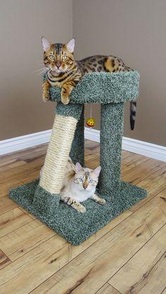"24"" Premier Elevated Cat Perch"