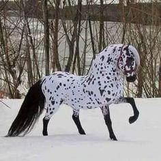 Beautiful horse in winter - horses & animals background wallpapers on desktop nexus (image Beautiful Horse Pictures, Most Beautiful Horses, Animals Beautiful, Beautiful Gorgeous, Trees Beautiful, Beautiful Unicorn, Cute Horses, Pretty Horses, Horse Love