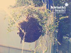String gardens - http://kwiatkibratki.pl/zrodlany-ogrod-montaz/