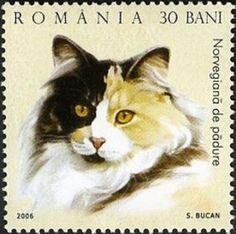 Norwegian Forest Cat (Felis silvestris catus)