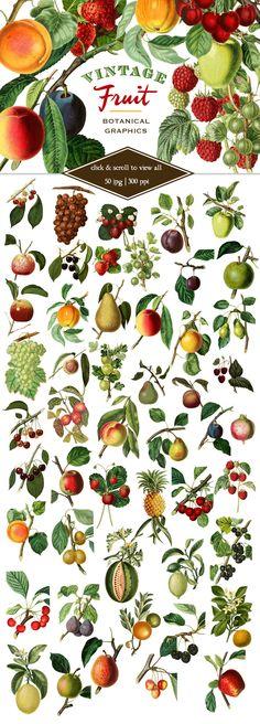 Vintage Fruit Botanical Graphics ~ Objects on Creative Market