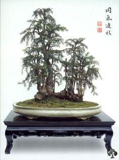 Bonsai: A arte de criar árvores em miniatura Curiosidades
