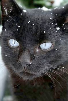 Found > Top 10 Most Beautiful Cats Breeds #get
