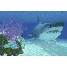 A huge Megalodon shark swimming in clear ocean waters Canvas Art - Corey FordStocktrek Images (35 x 23)