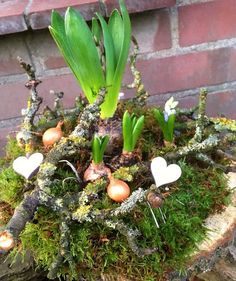 Spring Decade, Beautiful Flower Nest ~ Spring Decoration ~ Spring - Mirjam Slebus - Welcome to the World of Decor! Garden Care, Summer Flowers, Purple Flowers, Beautiful Gardens, Beautiful Flowers, Spring Decoration, Onion Flower, Moss Garden, Deco Floral