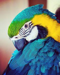 📷 @livingwithaparrot #petclubsa #parrot #birds #rainbowlorikeet #lorikeet #bird #birdsofinstagram #parrots #beautiful 📍 Brescia Parrots, Cute Animals, Birds, Club, Pets, Beautiful, Instagram, Pretty Animals, Cutest Animals