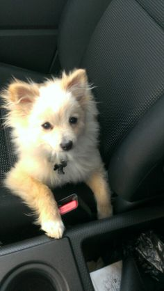 pups on pinterest yorkie  pomeranian mix and american dog house furnaces and heaters dog house findlay