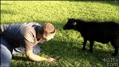 The Person Pretended To Be A Goat So The Goat Pretended To Be A Person