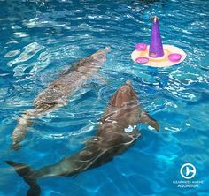 Did you see the adorable toy/fish cake that Winter & Hope received for their birthdays this past week? They both seemed to really enjoy it! Dolphin Tale 2, Dolphin Reef, Bottlenose Dolphin, Pretty Fish, Cool Fish, Winter Pictures, Cute Pictures, Ocean Park Hong Kong, Clearwater Marine Aquarium