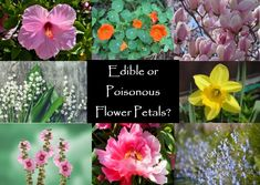 Medicinal Herbs, Edible Flowers, Healthier You, Flower Petals, Health Benefits, Learning, Eat, Free, Design