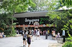 Looking for Tour & travel packages to Singapore? Book Singapore Holiday Packages from Delhi, Mumbai, Bangalore & Chennai India. Get the best holiday deals on Singapore Packages from India Singapore Tour, Singapore Garden, Visit Singapore, Singapore Travel, Singapore Things To Do, Zoological Garden, Surviving In The Wild, Holiday Places, Adventure Tours