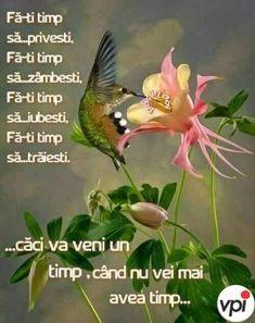 Plants, Life, Respect, Internet, Garden, Messages, Buen Dia, Beautiful Flowers, Bonito