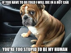 Are you looking for a cute and funny bulldog meme? These 20 cute bulldog memes will surely elicit aww's and make you want to adopt one. Funny Wrestling, Wrestling Quotes, Funny Dogs, Cute Dogs, Funny Animals, Adorable Animals, Stupid Animals, Bulldog Meme, Dog Thoughts