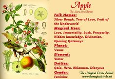 Apple Magical Properties - The Magical Circle School - www.themagicalcircle.net