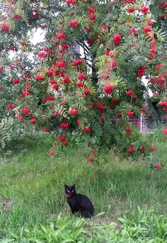 """* * """" Dat tree gonna stealz me thunder in dis picture. I be gladz I haz a red collar."""""""