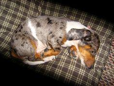 Dunc as a puppy ^.__.