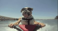12 Animals Totally Nailing Their Beach Vacations