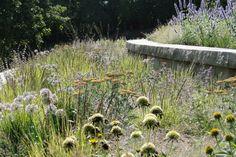 ADAM WOODRUFF + ASSOCIATES - echinacea, allium, agastache, yarrow