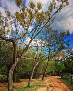 Jardín botánico.Asunción