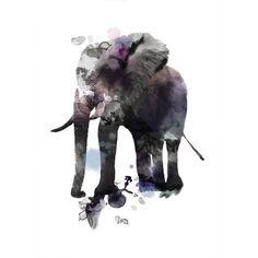 Elephant Wall Art  at Joss and Main