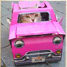 Kitty kar #cute #cats