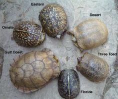 Eastern Box Turtle - Brandywine Zoo - Wilmington, Delaware 302.571.7747