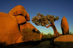Oh! The Places You'll Go...In LA: Joshua Tree Rock Climbing