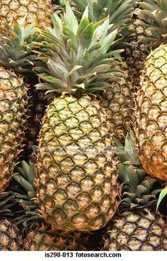 The pineapple (Ananas comosus) is a tropical plant with edible multiple fruit consisting of coalesced berries, and the most economically significant plant in the Bromeliaceae family.Pineapples may be cultivated from a crown cutting of the fruit, possibly flowering in 20–24 months and fruiting in the following six months. Pineapple does not ripen significantly post-harvest. In the Philippines the pineapple's leaves are used to produce the textile fiber piña.