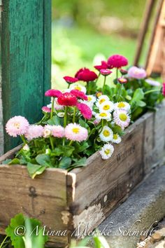 Container gardening is a fun way to add to the visual attraction of your home. You can use the terrific suggestions given here to start improving your garden or begin a new one today. Your garden is certain to bring you great satisfac Container Flowers, Container Plants, Container Gardening, Beautiful Gardens, Beautiful Flowers, Indoor Gardening Supplies, Diy Easter Decorations, Deco Floral, Flower Boxes