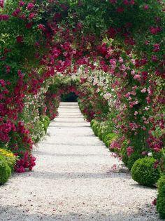 The Garden Aesthetic rose arbor Garden Paths, Garden Landscaping, Garden Archway, Garden Arbor, Love Flowers, Beautiful Flowers, Simply Beautiful, Rose Arbor, Rose Garden Design