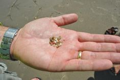 'Nurdle Patrol' survey finds plastic pellets on almost every Louisiana and Texas beach | Environment | nola.com