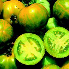 Tomato, Green Zebra