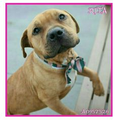 ☆☆☆SWEET RITA ☆☆☆LISTED TOO LONG RUNNING OUT OF TIME ☆☆AVAILABLE IN BROOKLYN @NYCDOGS.URGENTPODR.ORG ☆☆☆