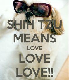 SHIH TZU MEANS LOVE LOVE LOVE!!