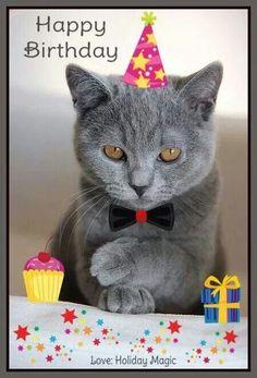 Happy Birthday Cat Images, Happy Birthday Drinks, Free Happy Birthday Cards, Happy Birthday Wishes Photos, Happy Birthday Wishes Images, Happy Birthday Wallpaper, Cute Happy Birthday, Happy Birthday Candles, Happy Birthday Greetings