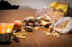 On their first excursion around our home at night, the dinos discover breakfast.  #dinovember