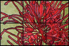 Pod and Pod: Grevillea 6 panels