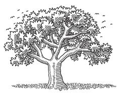 Beautiful Tree Nature Symbol Drawing