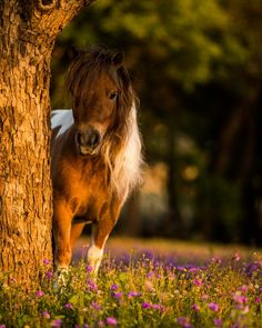 A great shoot in the fields with a lovely pregnant miniature mare. She is a kind hearted and curious one that loved doing the pose! Miniature Horses, Horse Photography, Fields, Miniatures, Poses, Flowers, Animals, Instagram, Figure Poses