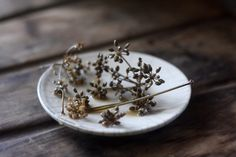 Pickled Fennel Flowers – ALL THE THINGS