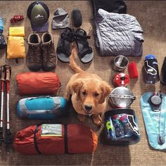 Camping And Hiking, Camping Hacks, Camping Gear, Outdoor Camping, Camping Dogs, Tent Camping, Camping Theme, Dog Hiking Gear, Oregon Camping