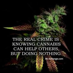 The real crime is knowing cannabis can help others but doing nothing.   www.wheretofindweed.com