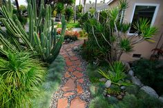 Drought tolerant front yard. Low maintenance, low water usage and beautiful.