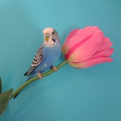 Cooper loves spring flowers
