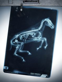 horse and foal x-ray - look how much room it takes up!