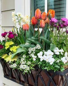 """307 """"Μου αρέσει!"""", 14 σχόλια - Susan Nock (@sngardendesign) στο Instagram: """"Windowbox Wednesday... when your client asks for lots of bright color... . . . #windowboxes…"""" Garden Windows, Spring Bulbs, Day Plan, Window Boxes, Spring Flowers, Container Gardening, Photo And Video, Warm Spring, Plants"""