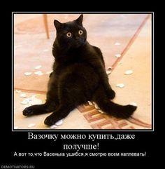demotivatory-cat-f-it-ru5.jpg (470×480)