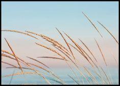 Pastel beach Poster in der Gruppe Poster / Größen und Formate / 50x70cm bei Desenio AB (2300)