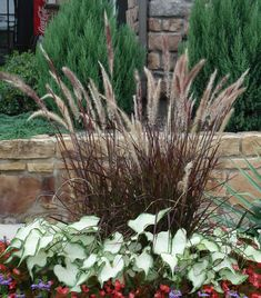 View landscaping photos of ornamental grasses to inspire your imagination and make your dream landscape a reality. Tall Outdoor Planters, Fountain Grass, Grass Seed, House Landscape, Ornamental Grasses, House Front, Dream Garden, Backyard Patio, Shrubs