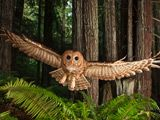 Wonderful Owl photo from National Geographic photo of the day site